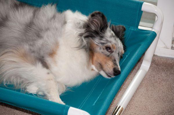 Elevated Large PVC Dog Bed