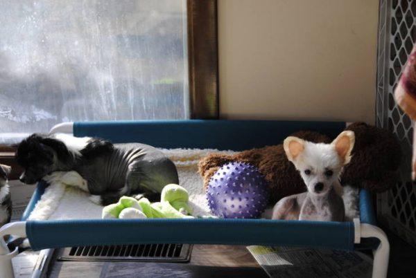 Canine Bed Cross Bar