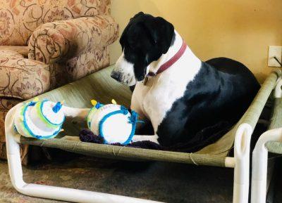 Indoor Raised Puppy Cot