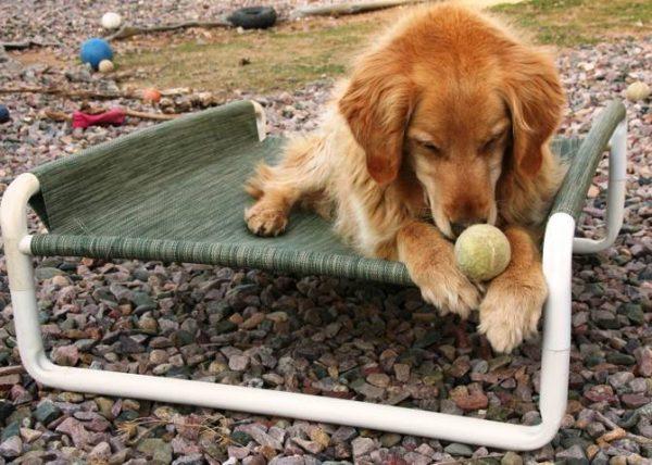 Outdoor Raised Pet Cot