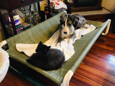 Indoor Raised Puppy Bed
