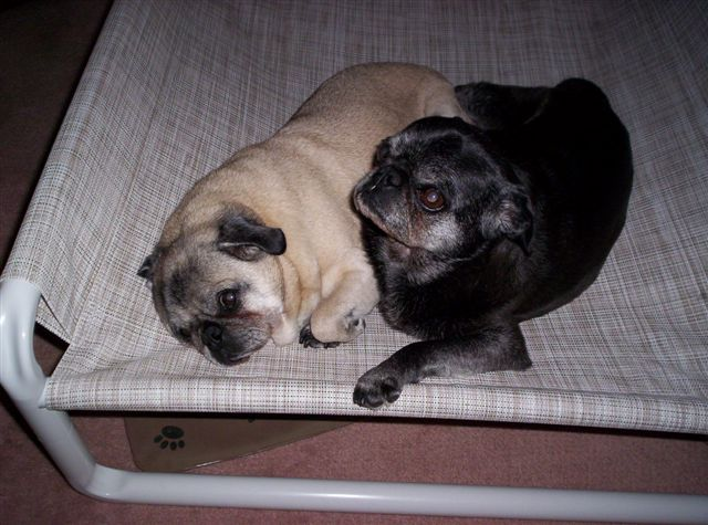 Raised Medium Dog Bed