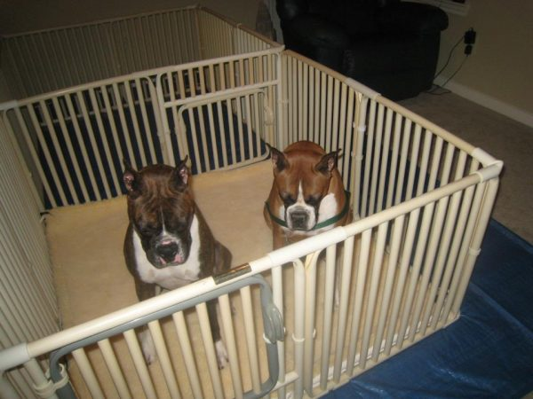 Small Puppy Weaning Pen