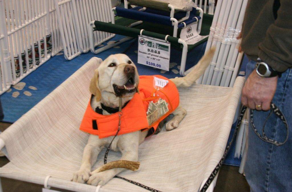 Training Your Dog Stop Barking