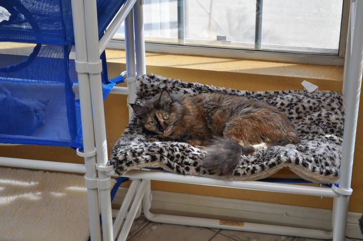 Your Stubborn Kitty Cat