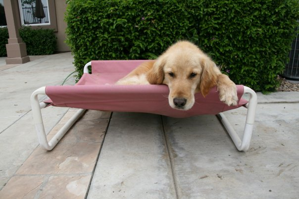 Training Your Dog Puppy by Roverpet.com : Buy Now
