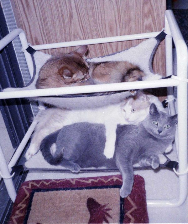 Two Level Cat Beds