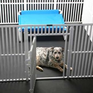 "6' x 6' Roverpet Pet Cage 36"" Tall"