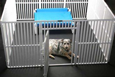 X Large Plastic Dog Crates