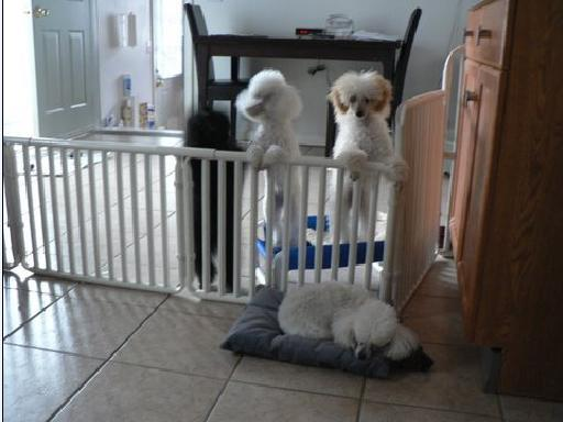 Small Puppy Gate Roverpet