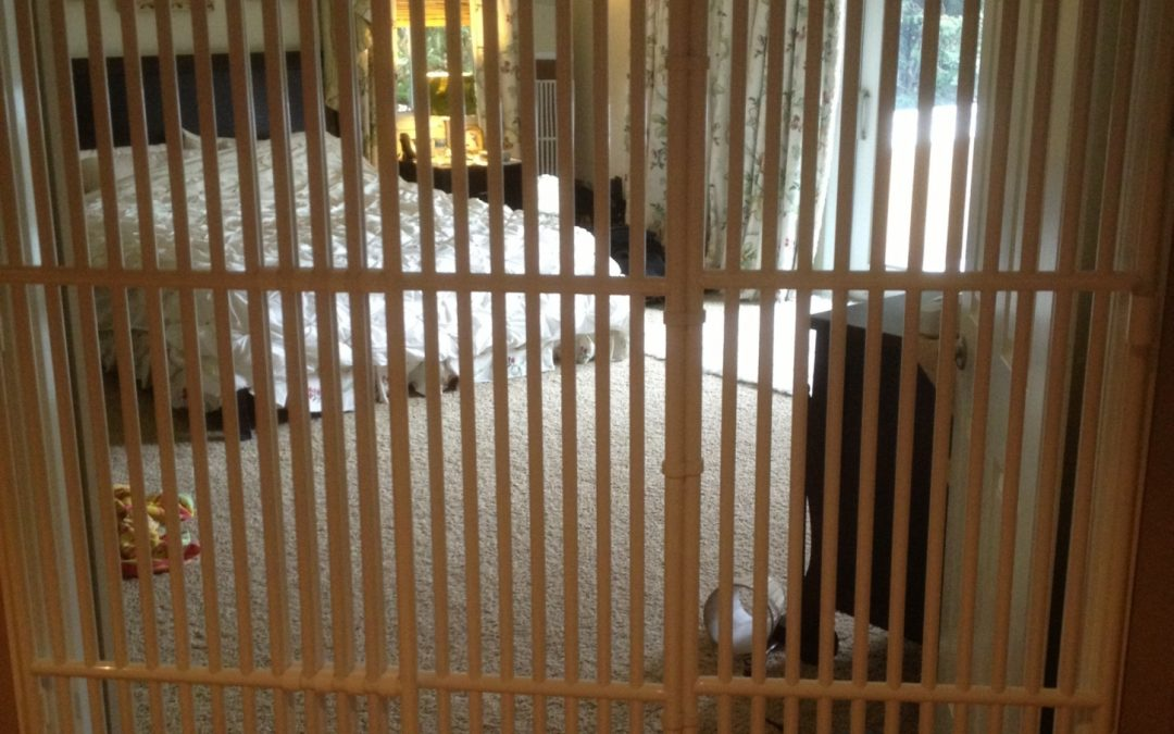 Extra Tall Pet Gate at Roverpet.com : Testimonial