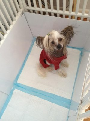 Puppy Crate PVC Divider