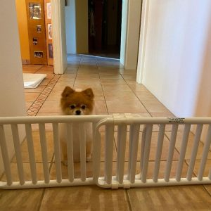 Small Pet Dog Canine Gate