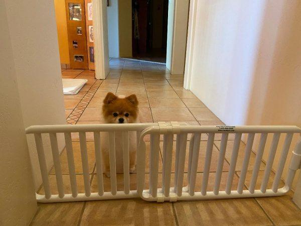 Small Pet Gate