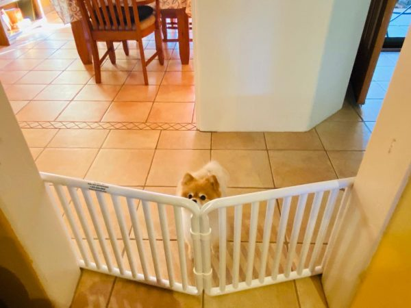Small Pet Canine Gate