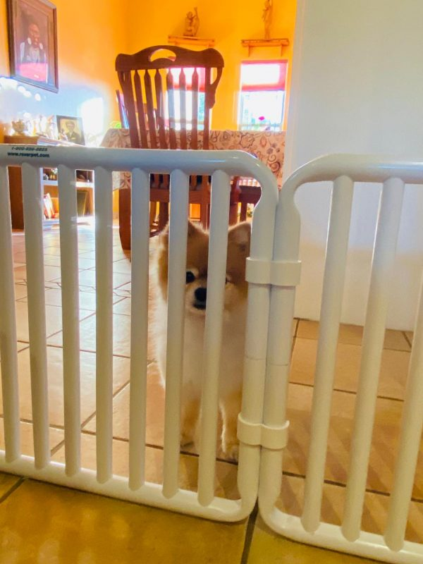 Small Puppy Canine Gate