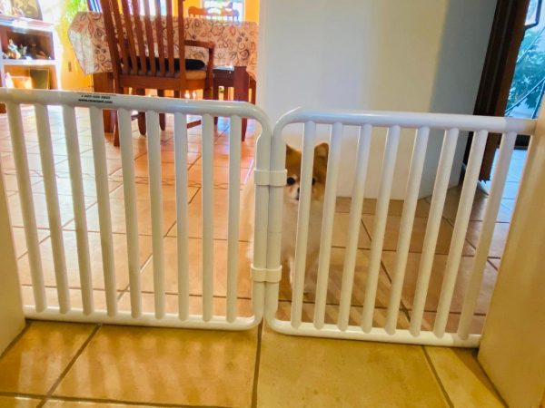 Small Puppy Gate