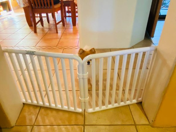 Small Canine Puppy Gate