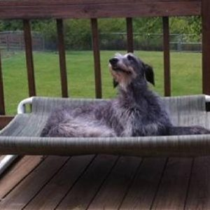 PVC Outdoor Dog Beds