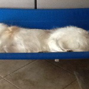 Extra Large PVC Dog Beds
