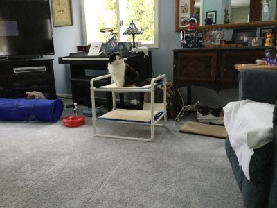 Indoor Raised Kitty Bed