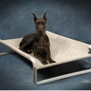 Sturdy Large Dog Beds