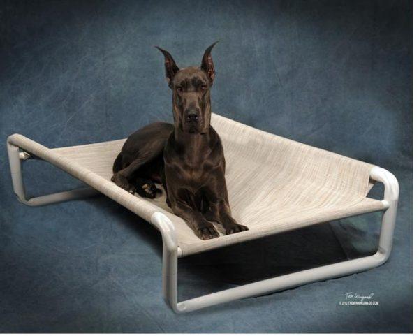 Extra Large Elevated Dog Beds