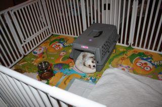Pet Cage Door