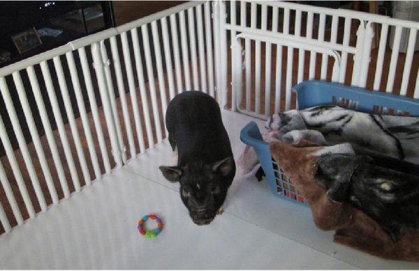 PVC Pet Cage