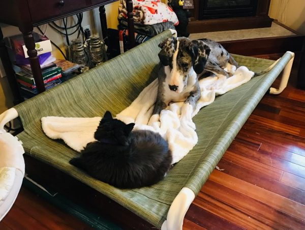 Large Puppy Beds