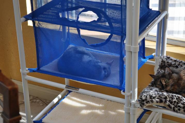 Indoor Cozy Cat Furniture by Roverpet.com