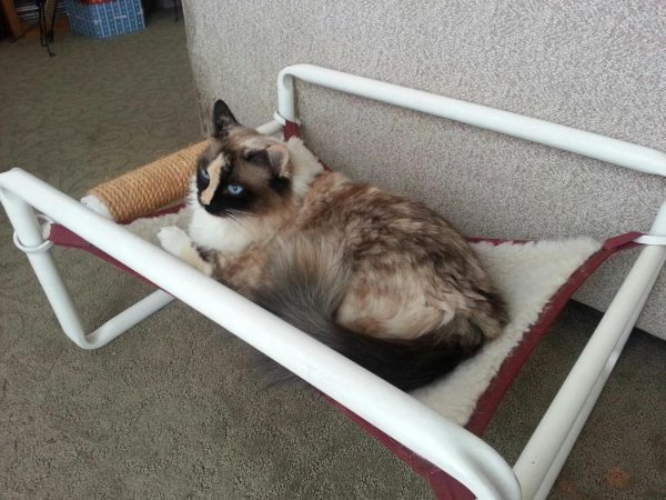 Indoor Comfy Kitty Furniture