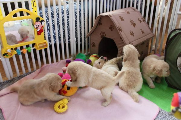 Puppy Enclosure