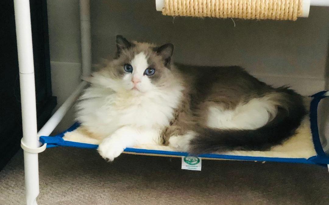Indoor Cozy Cat Furniture