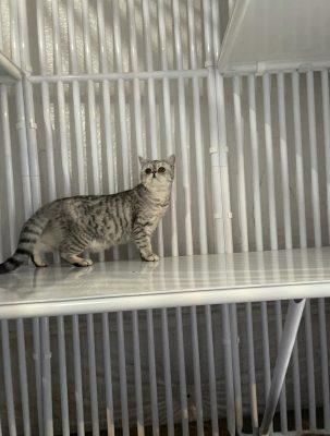Cat Condo Panel
