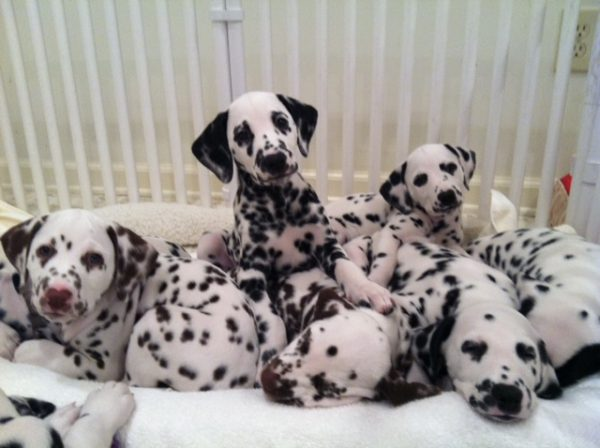 Small Plastic Dog Crates