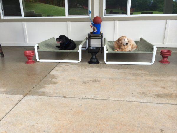 Outdoor Raised Pooch Bed