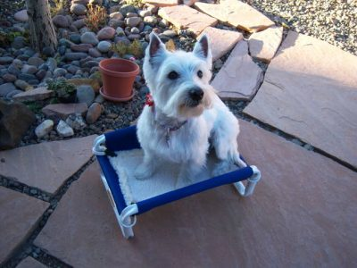 Small Dog Beds Chew Guard