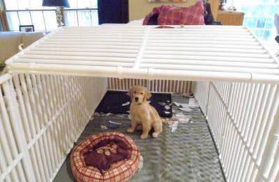 Dog Crate Top
