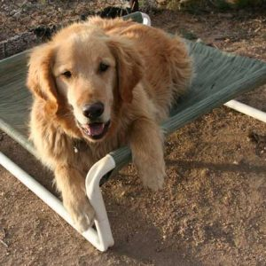 Elevated Large PVC Dog Bed