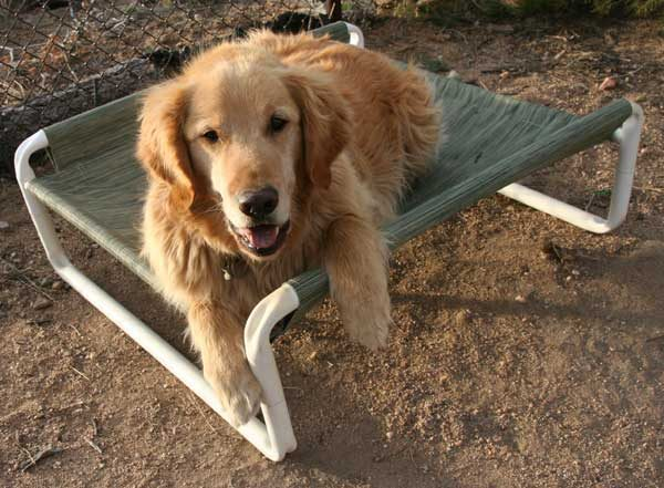 Raised Medium Dog Bed