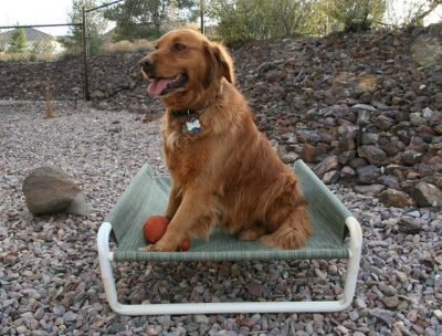 Elevated Medium Pet Beds