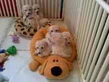 Small PVC Puppy Panel