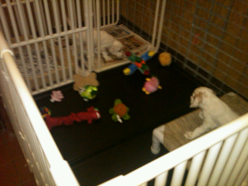 Best Canine Pet Play Pen by Roverpet.com