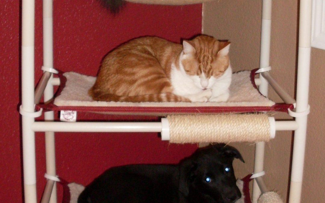 The Best Kitten Cat Tower by Roverpet.com