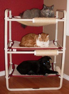 Three Level Kitten Bed