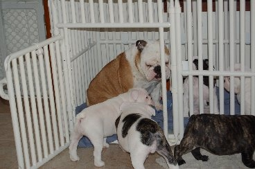 The Best Pet Dog Cage