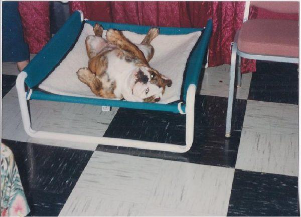 Indoor Raised Canine Cot