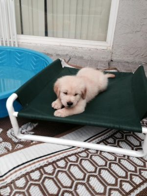 Outdoor Raised Canine Cot
