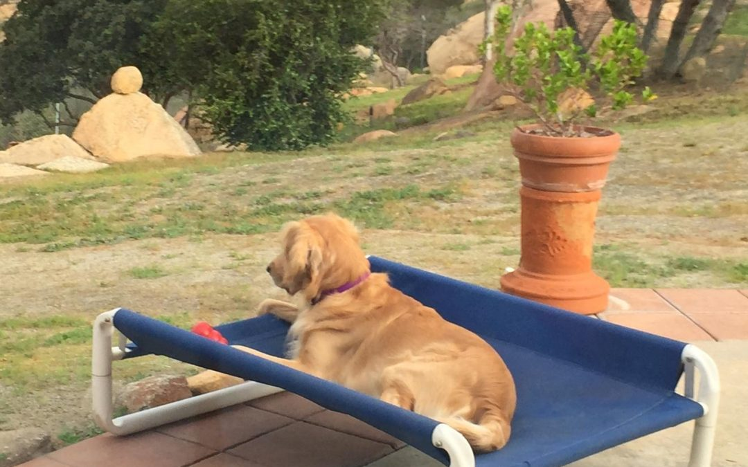 Outdoor Raised Puppy Cot